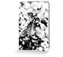 Black & White Wet Holly Greeting Card