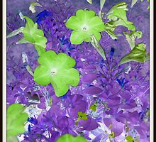 Petunia Inverted by Debbie Robbins