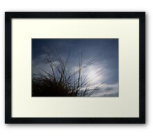 Grasses on the Beach at Croyde Framed Print