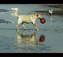 playing dog shines by LisaBeth