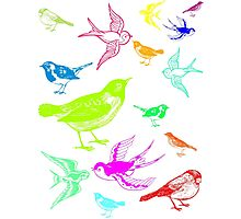 Brightly coloured birds Photographic Print