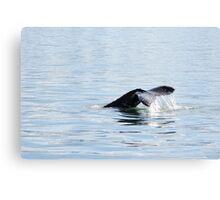 Humpback diving Canvas Print