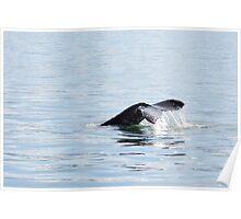 Humpback diving Poster