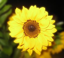 Sunflower Love by Mary Ann Battle
