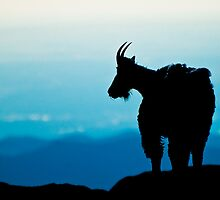 Mountain Goat Silhouette by Gary Lengyel