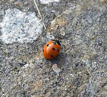7 Spot Ladybird by rhian mountjoy