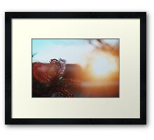 Afternoon Framed Print