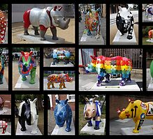 RHINO MANIA : Chester UK by AnnDixon