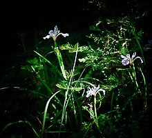 Wild Irises by Phillip M. Burrow