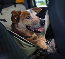 Road Trip2 by SamTheCowdog