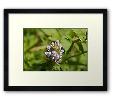 Self Heal Framed Print