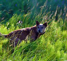 In Breeze by SamTheCowdog