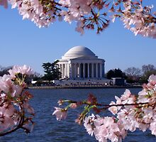 Cherry Blossom: Jefferson Memorial by PhilipBrown