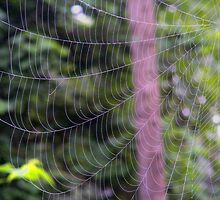 Spider Web by barnsis
