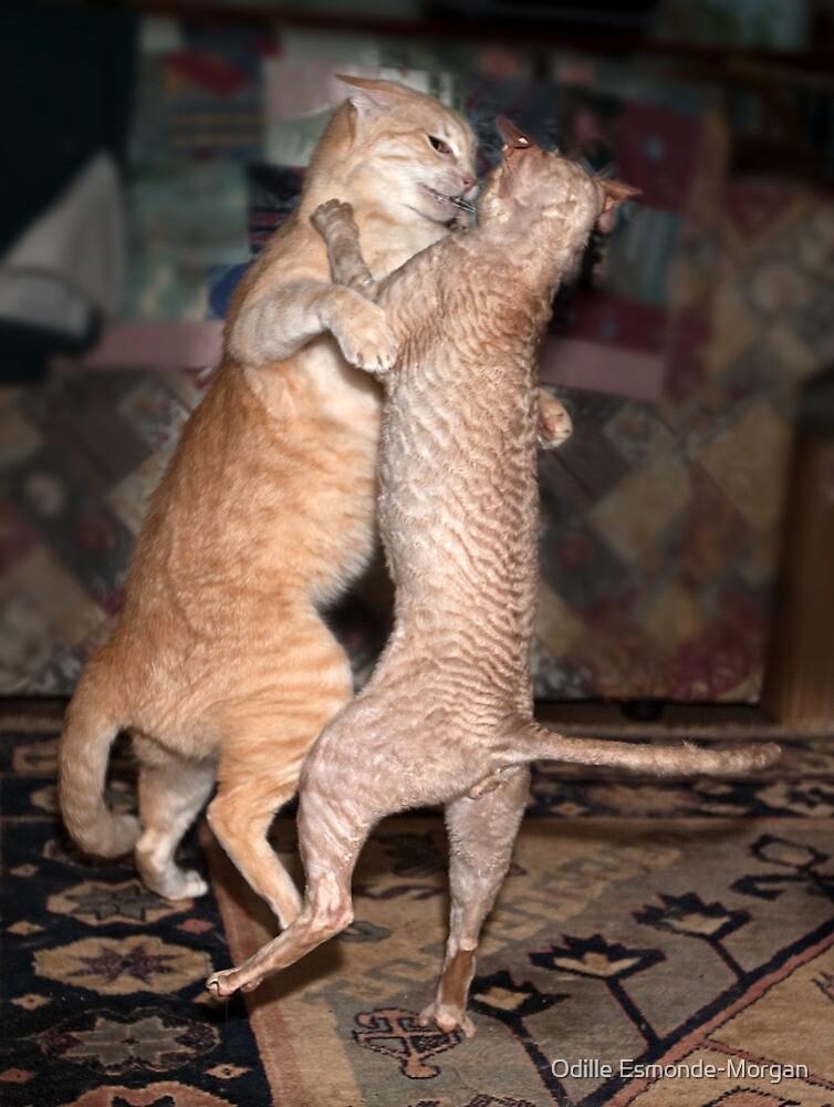 The Dancing Cats by Odille Esmonde-Morgan