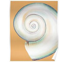 White Moon Shell Poster