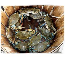 Crab Basket Poster