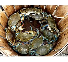 Crab Basket Photographic Print
