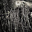 Mangrove No16 by Tim Boehm