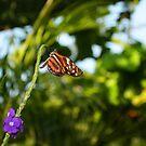 The Monarch by Daniela Weil