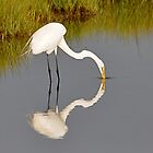 Silly Egret, It's Your Reflection by Monte Morton