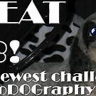 PhoDOGraphy Challenge Winner Banner 2 by PhoenixArt