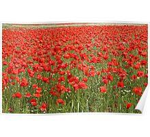 Poppies (Denmark) Poster