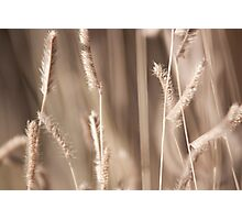 Crops Photographic Print
