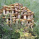 Mushroom  Gold by AlbertStewart