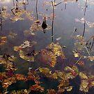 Pond Lilies by AlbertStewart