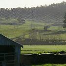 powerlines - like spiderwebs from the sky by gaylene