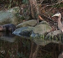 Otter & Great Blue Heron Fishing at Dusk by THurdCreations