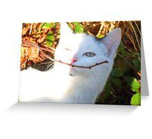 Kitten Moustache Greeting Card