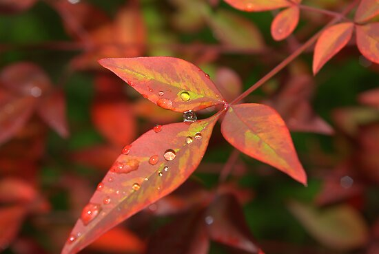 Raindrops by Kerry  Hill