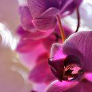Orchidée by Laurent Hunziker
