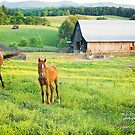 Kentucky Evening by Nicole  McKinney