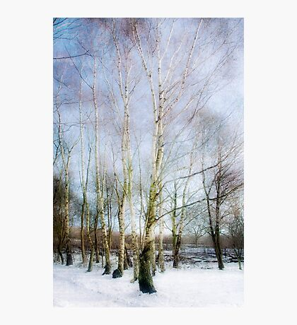 Winter Silver Birch Trees Photographic Print