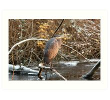 Great Blue Heron in Winter Art Print