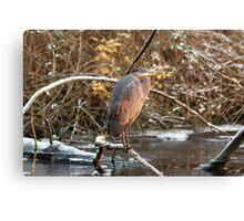 Great Blue Heron in Winter Canvas Print