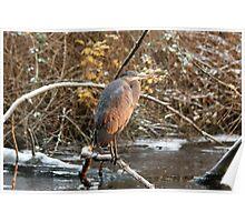 Great Blue Heron in Winter Poster