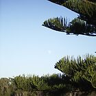 moon and pine by calamazoo