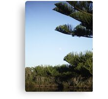 moon and pine Canvas Print