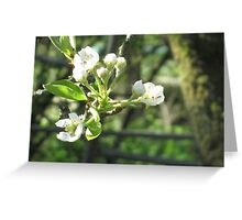 Pear Blossom Greeting Card