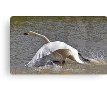 Bewick one cleared for take off Canvas Print