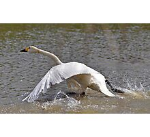 Bewick one cleared for take off Photographic Print