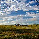 Late Afternoon Grazing - Beechmont by Marian Moore