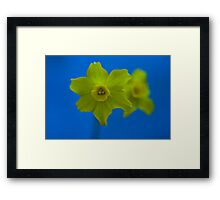 Daffodil Twin Framed Print