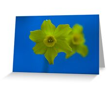 Daffodil Twin Greeting Card