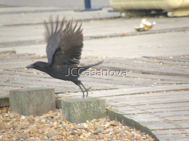 As The Crow Flys by JCCasanova