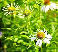 White flowers of Latvija 2 by Rita Analise Kaulina